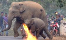 Słonie w Indiach stają się zagrożeniem. Wycinanie lasów zapędza je zbyt blisko ludz, dochodzi do kofliktu. Do sieci trafiły szokujące zdjęcia słoni w Indiach.