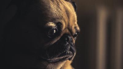 Ceny lekarstw dla zwierząt, w tym psów i kotów) mogą wzrosnąć. Projekt rządu zakłada że koszt leczenia zwierząt będzie wyższy