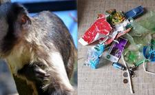 zoo warszawa małpa śmieci karmienie