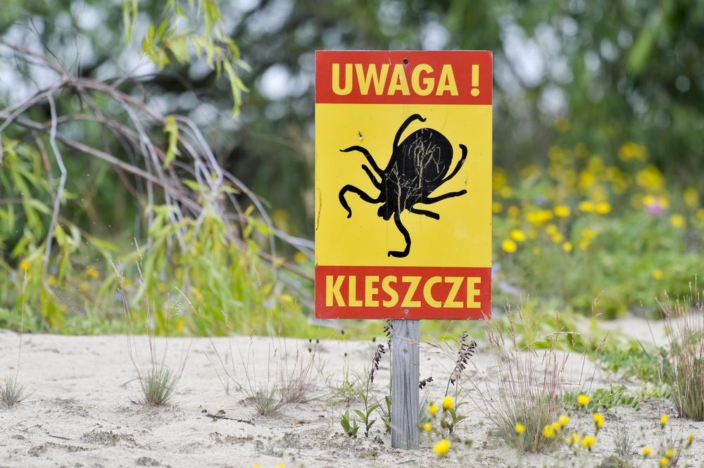 Sezon na kleszcze rozpoczyna się w Polsce już w marcu.