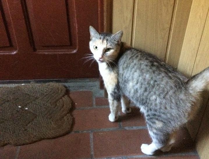 Jeden z oskarżonych kotów.