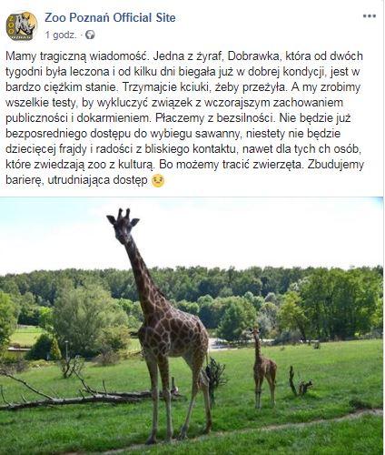 zoo poznań Facebook