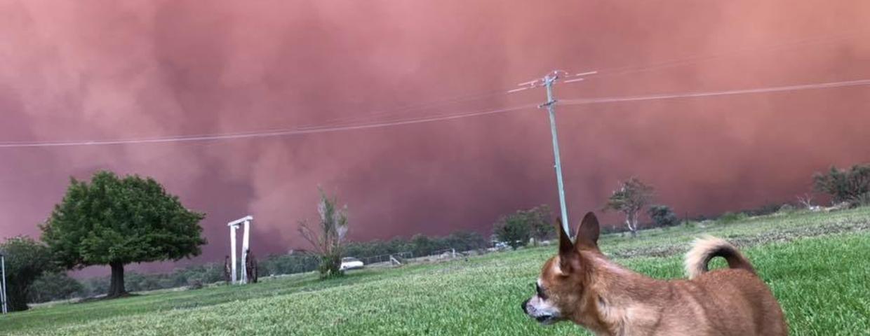 """""""Czerwona mgła"""" nad Australią - niezwykłe zjawisko, które wygląda jak z horroru Stephena Kinga. To tak naprawdę czerwona burza piaskowa"""