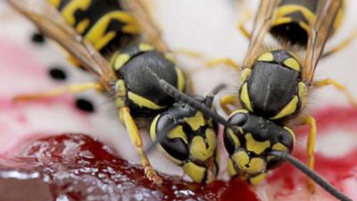 Populacja owadów na świecie ma wpływ na gatunki zwierząt, ekosystemy i łańcuch pokarmowy. Rolnictwo i pestycydy mogą doprowadzić do katastrofy.