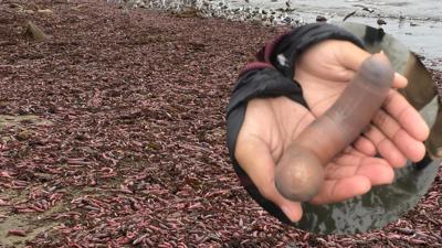 Falliczna apokalipsa na plaży! Zasypało ją tysiącami pulsujących penisów