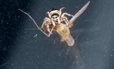 Komary gryzą ludzi przez pot
