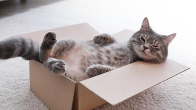 Warto przygarnąć kota?