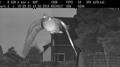 Fotoradar złapał gołębia na gorącym uczynku
