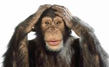Tajemnicza bakteria zabija szympansy. Zagraża ludziom