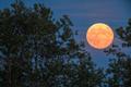 W piątek 13-tego królował będzie Księżyc Żniwiarzy. Następny za 40 lat