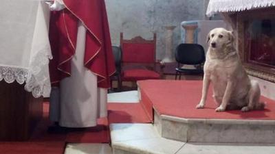 Pies, który został ministrantem. W kościele czuje się jak w domu