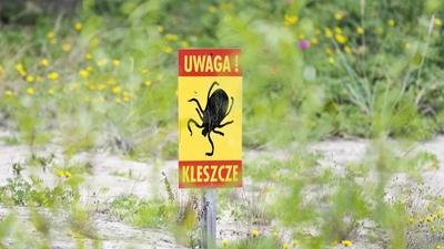 Polskę atakuje nowy gatunek kleszcza. Przenosi straszne choroby