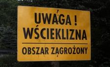 Wścieklizna w Poznaniu