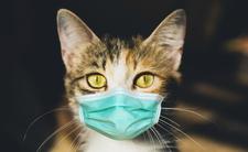 Rosjanie zarejestrowali szczepionkę dla zwierząt