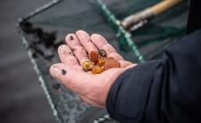 Złoża bursztynu odkryto na terenie przekopu Mierzei Wiślanej