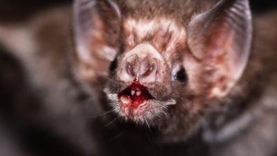 Nietoperze są rezerwuarem zabójczych wirusów w Europie? Nowe wyniki badań