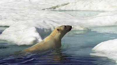 Topniejące lodowce nas pozabijają. Powrócą zapomniane, straszliwe choroby