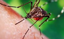 Ugryzł ją komar. Umarła w męczarniach na końskie zapalenie mózgu