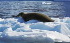 Upały na Antarktydzie będą coraz częstszym zjawiskiem