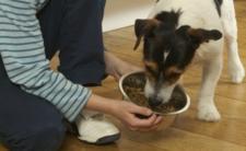 Lekooporne bakterie w psiej karmie. Mogą ZABIĆ CZŁOWIEKA