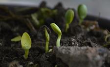 Kompost z nieboszczyka. Waszyngton wprowadza nowe prawo