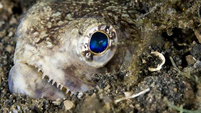 Wybitnie groźne, przerażające rybopotwory. Mogą żyć na lądzie!