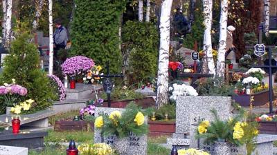 Hiena grasowała po cmentarzu w Łodzi. Ludzie byli w szoku