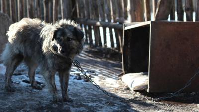 Warunki w jakich mieszkał pies były tragiczne