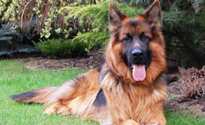 Myśliwy zastrzelił psa - grozi mu więzienie