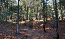Nożownik grasuje w polskim lesie. Zaatakował w sezonie grzybowym