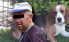 Powiesił psa sąsiada na łańcuchu - policja go wypuściła