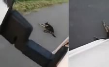 Przejechał psa i to nagrał. Rafał B. zatrzymany