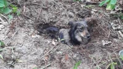 Pies zakopany żywcem w lesie - policja szuka potwora
