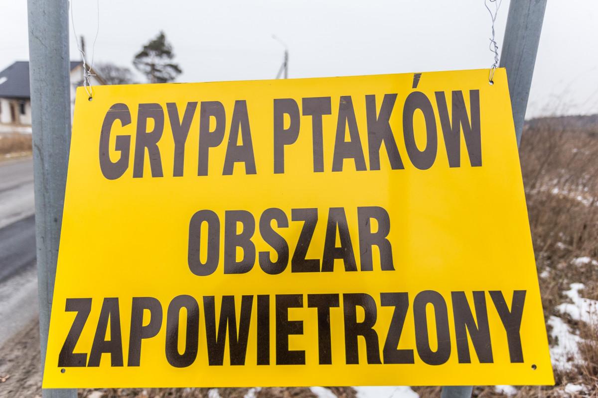 Ptasia grypa w Polsce