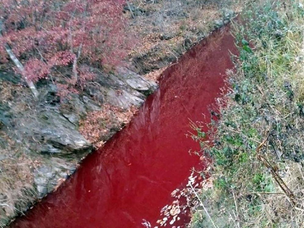 Rezka krwi w Korei
