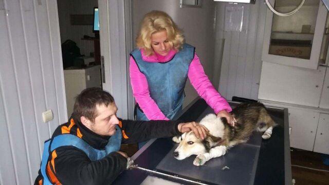 Urzędnik skatował psa