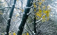 Atak zimy w Polsce. Najpierw zamiecie śnieżne, potem gwałtowna zmiana