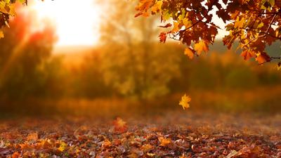 Prognoza pogody, listopad