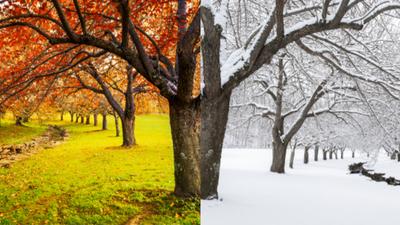 Pogoda odleciała. Za chwilę +20 stopni, pod koniec listopada -20!