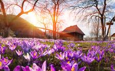 Totalny wybuch wiosny! Na termometrach nawet 18 stopni