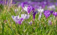 UWAGA!!! Wybuch wiosny! Dziś masa słońca, ale... zostań w domu!