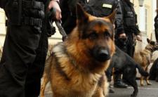 Psy ochraniały biura posłów PiS