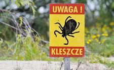 Egzotyczne kleszcze atakują. Polska padła ofiarą pajęczaków