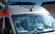 Epidemia ASF w Polsce - płot zatrzyma zakażone dziki i świnie?