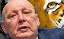 Uratowane tygrysy w Poznaniu - jasnowidz Jackowski zna ich przyszłość