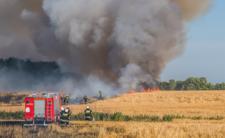 Susza, głód i pożary - rok 2020 to nadchodzace katastrofa hydrologiczna?