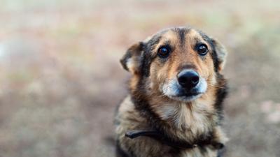 Pijany mężczyzna zabił siekierą psa swojej partnerki. Grozi mu 5 lat więzienia