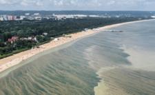 Sinice w Bałtyku - zamknięte kąpieliska i zagrożenia dla zdrowia!