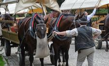 Droga do Morskiego Oka i podróż powozem z koniem - cena to cierpienie zwierząt?