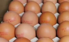 Jajka z salmonellą - możliwe zatrucie pokarmowe
